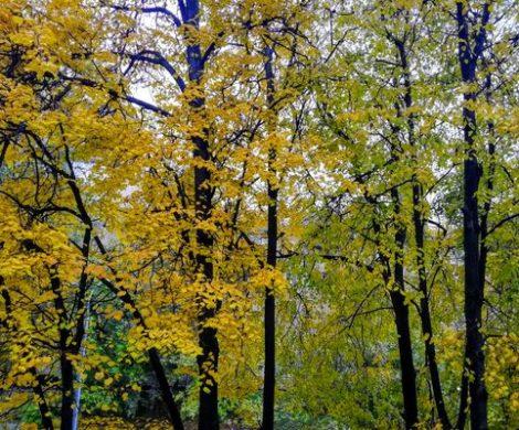 Что почитать в октябре humaneducation.ru